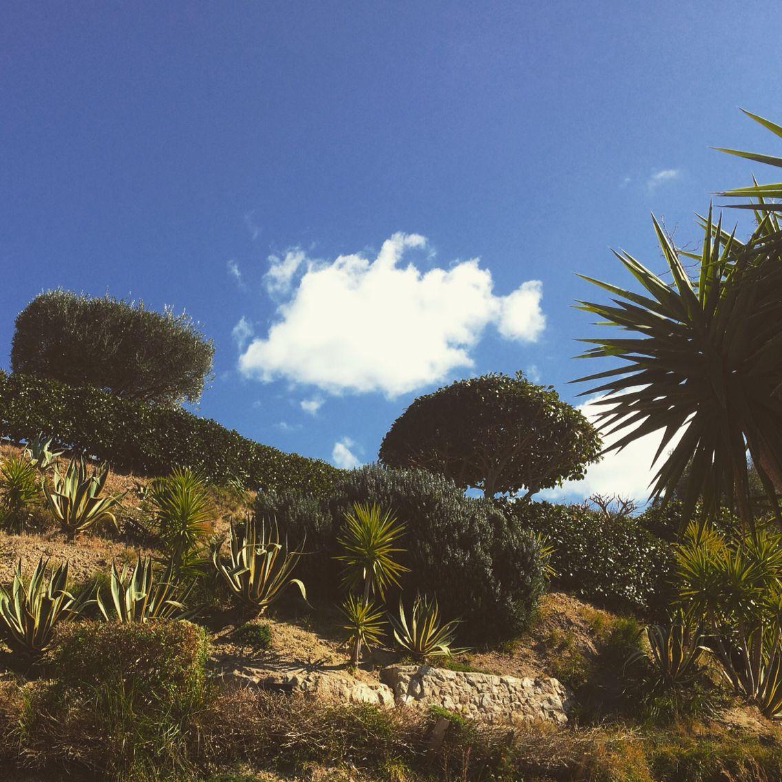My mediterranean garden.. Do you like it?