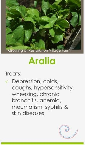Some Health Benefits Of Aralia Aralia Health Healing Medicinal