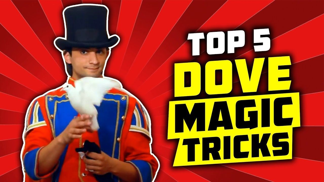 box dove magic trick revealed  its only illusion