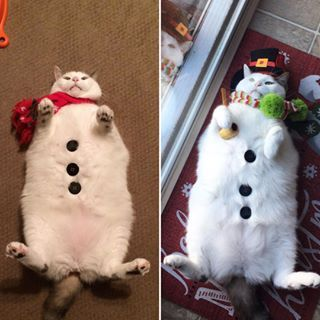 Have a #Splootybooty Christmas🎶🎄🍑 #itsthebesttimeoftheyear#chunkyjolly#bigbootybow#fatcat#fatcats#fatcatsofinstagram