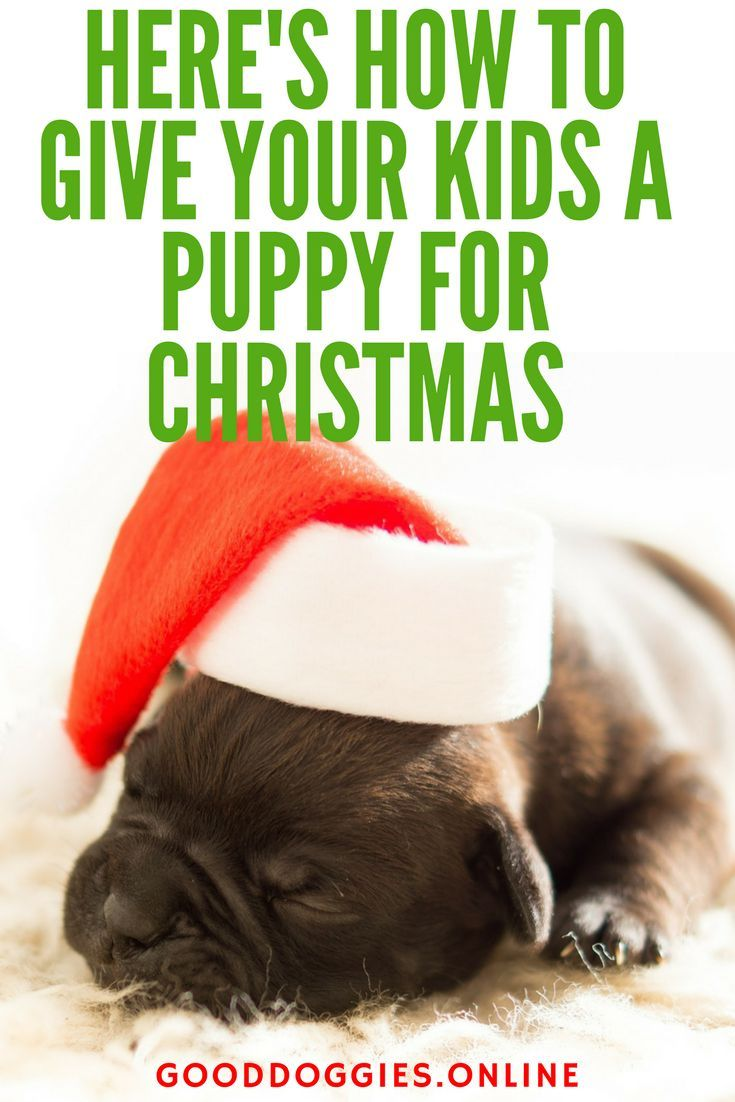 A Puppy For Christmas.Puppy For Christmas Christmas The Most Wonderful Time Of