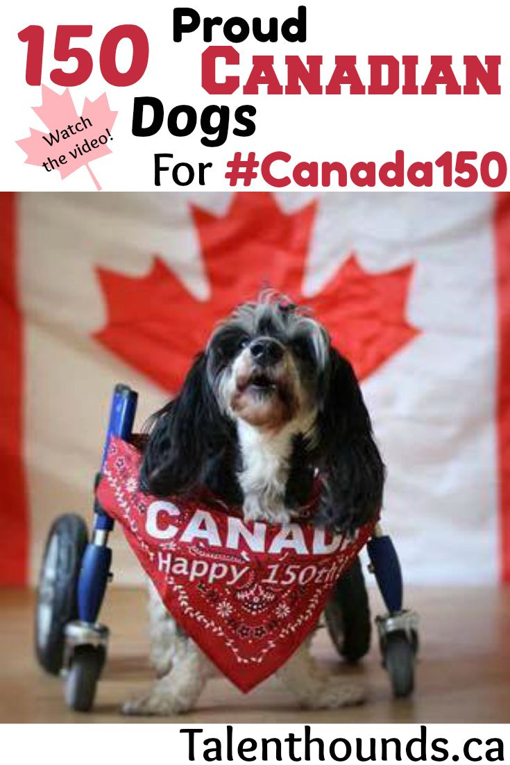 150 Proud Canadian Dogs To Wish You A Happy And Safe Canada Day