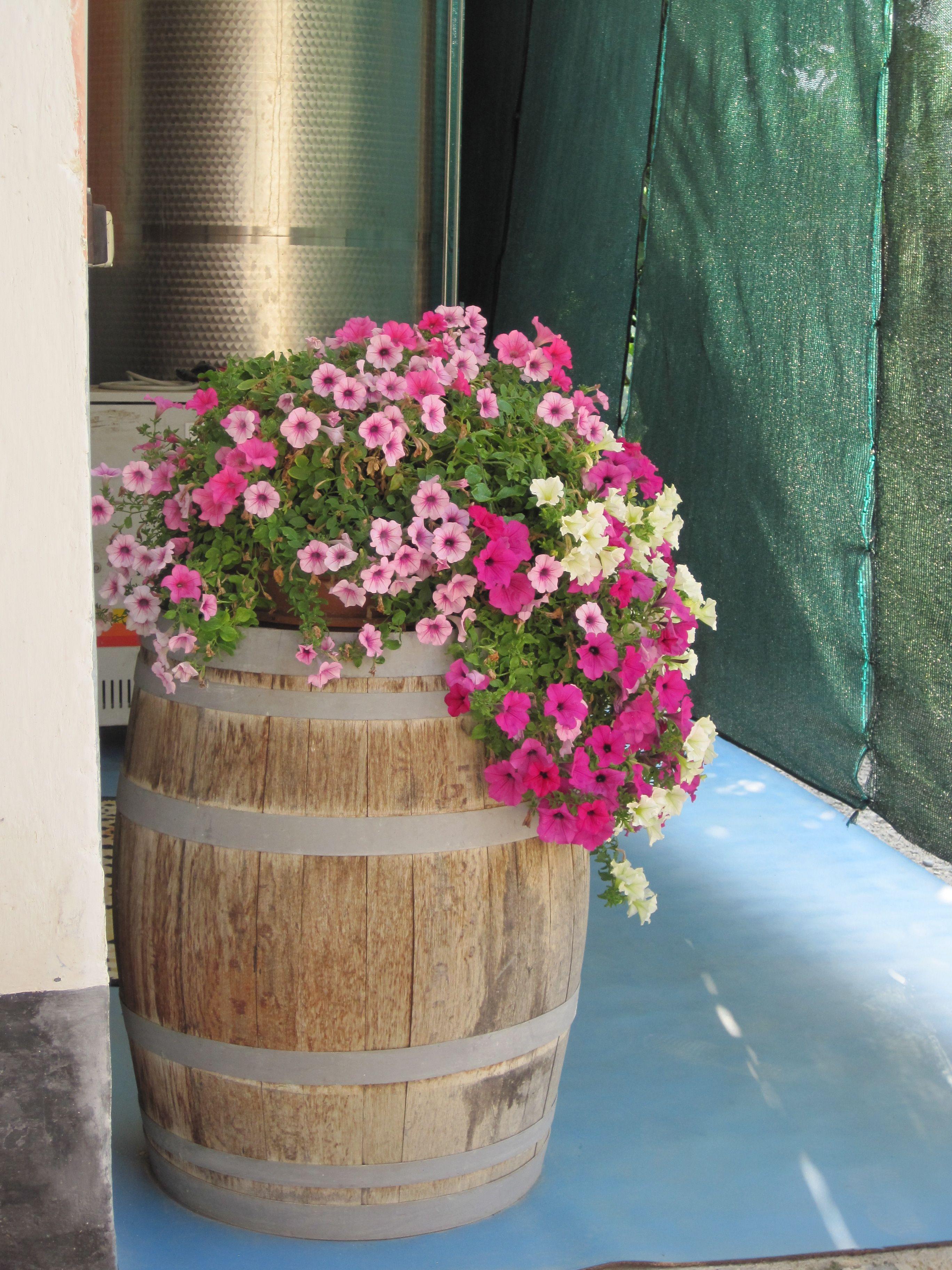 Цветник из деревянной бочки фото