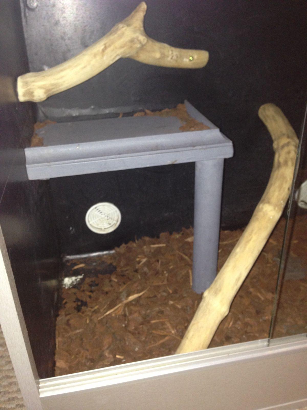 Vivarium shelf - Reptile Forums