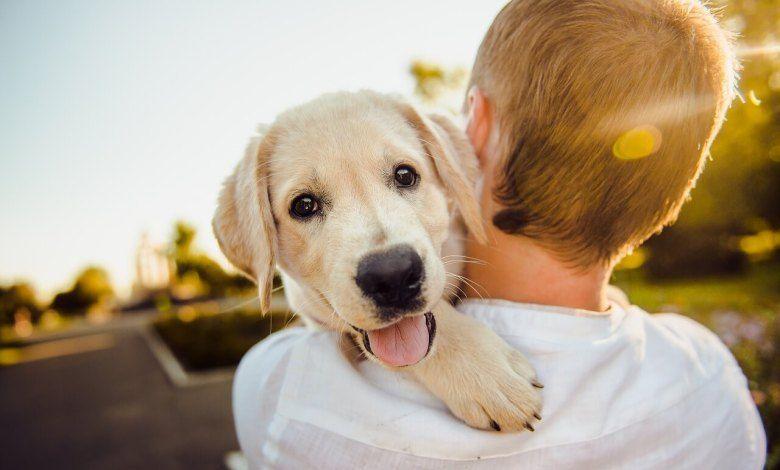 اصوات الكلاب ومعناها 8211 تفسير تصرفات الكلاب وكيف اتكلم مع الكلاب Happy Dogs Best Dog Breeds Cheap Puppies