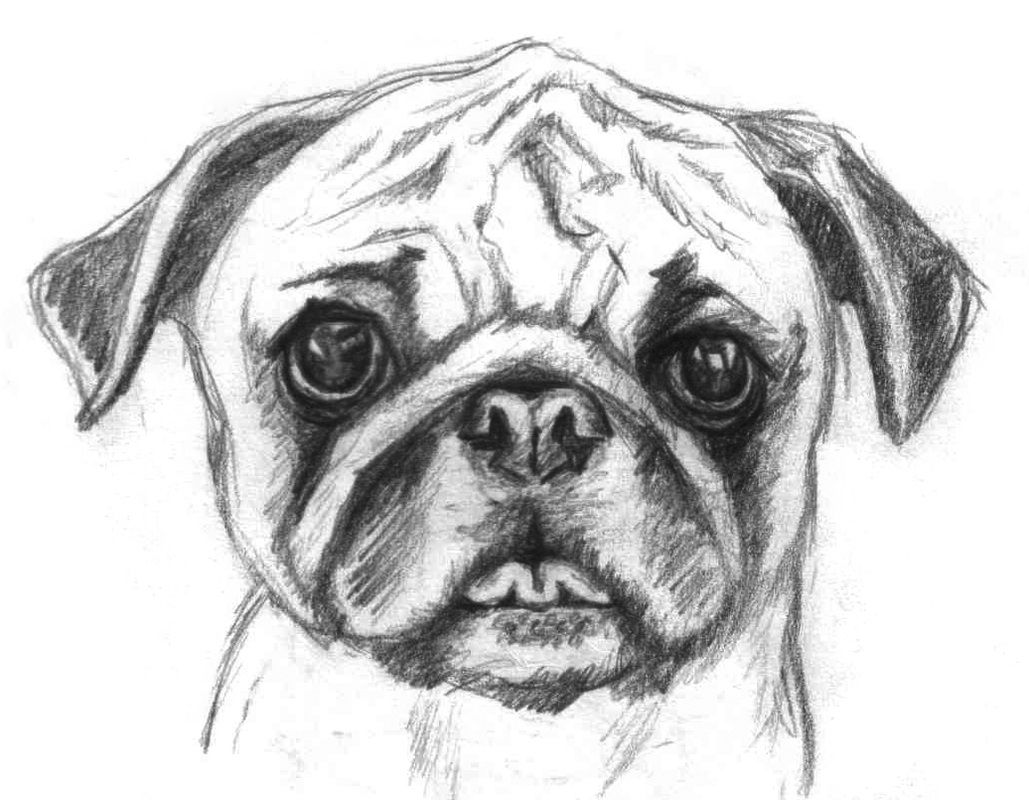Pug Drawing Puppy Sketch Dog Coloring Page