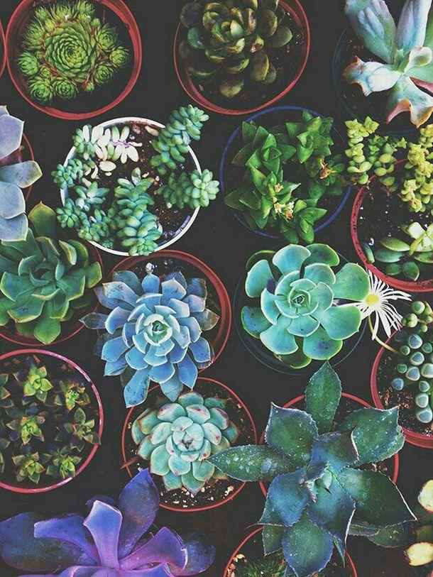 cacto, flores, grunge, casa, indie, natureza, plantas, tumblr