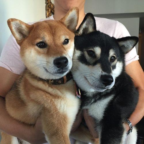 Imagen De Dog Cute And Animal In 2020 Cute Animals Animals Cute Puppies