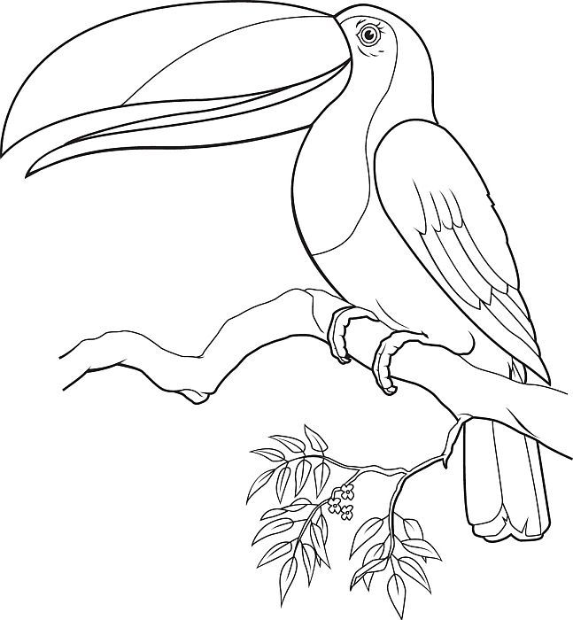 Tucan Coloriage Embroidery Coloring Pages Pattern Coloring