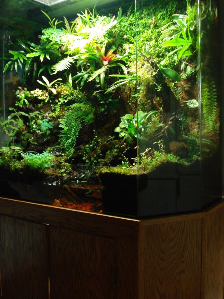 Rootus viv vivarium pinterest vivarium terraria and aquariums