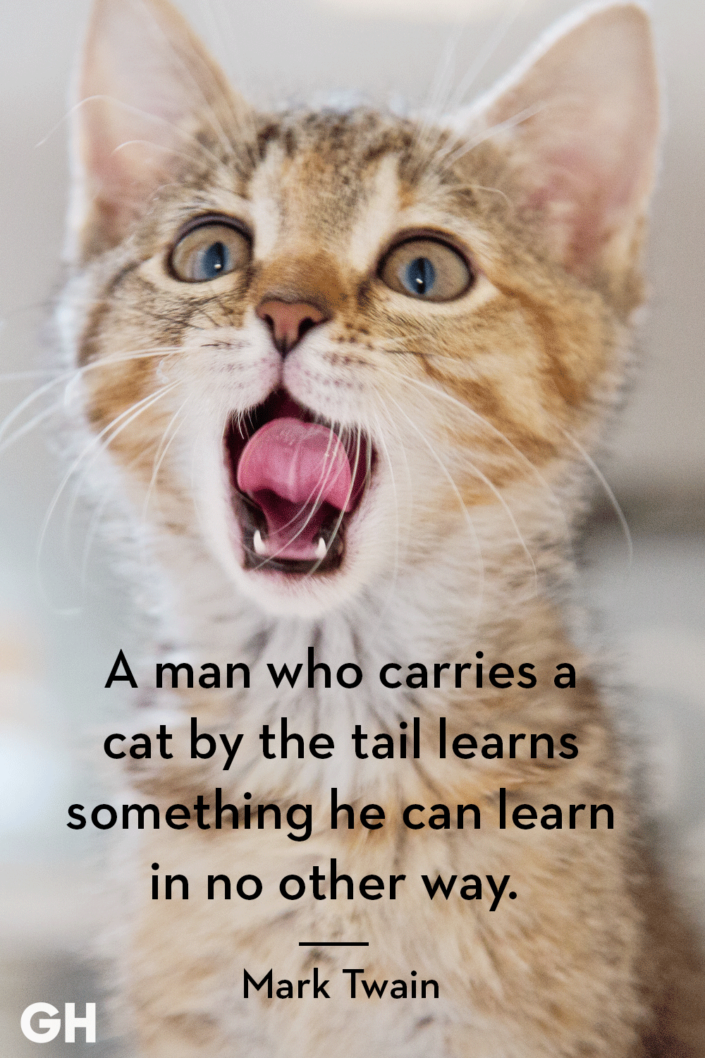25 Quotes Only Cat Owners Will Understand (With images