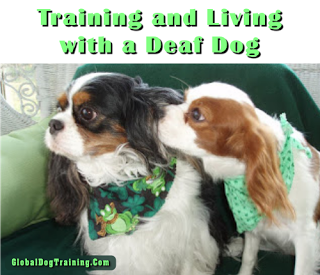 Deaf Dogs And How To Train A Deaf Dog Smart Cuteness Pinterest
