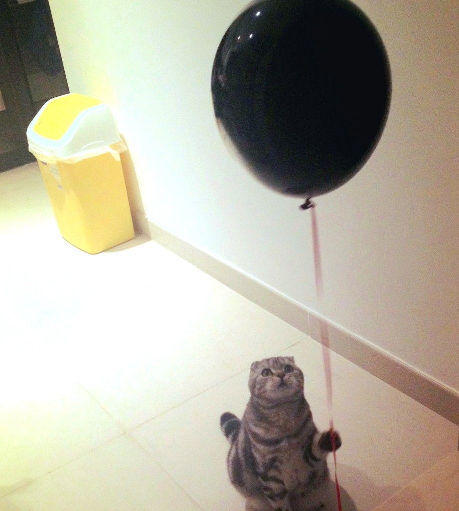 Gato con el globo