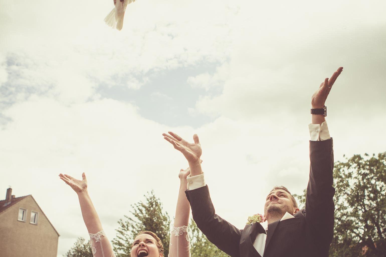 Hochzeittauben. Wedding Dove.