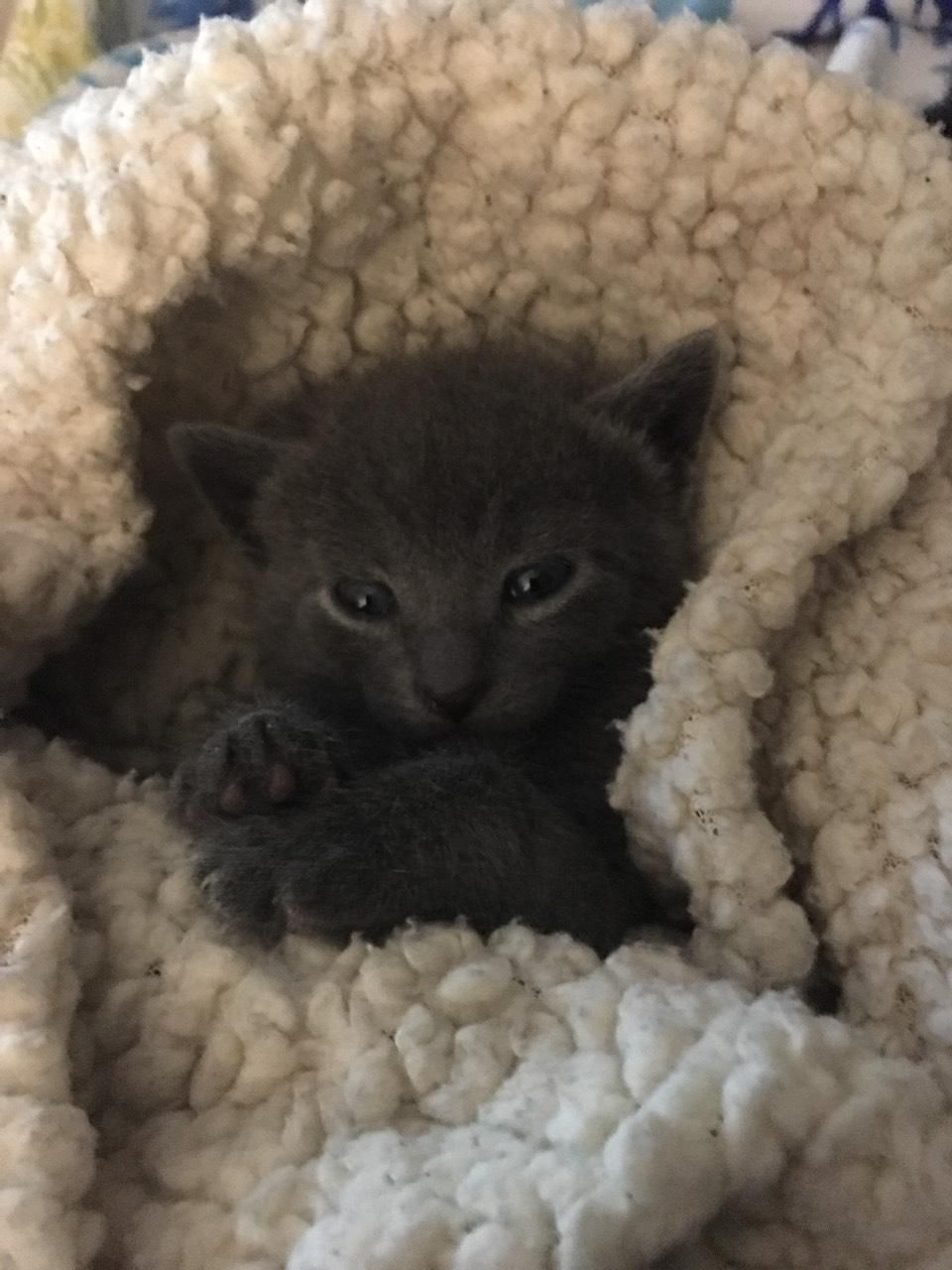 3 Weeks Old 1 Out Of 3