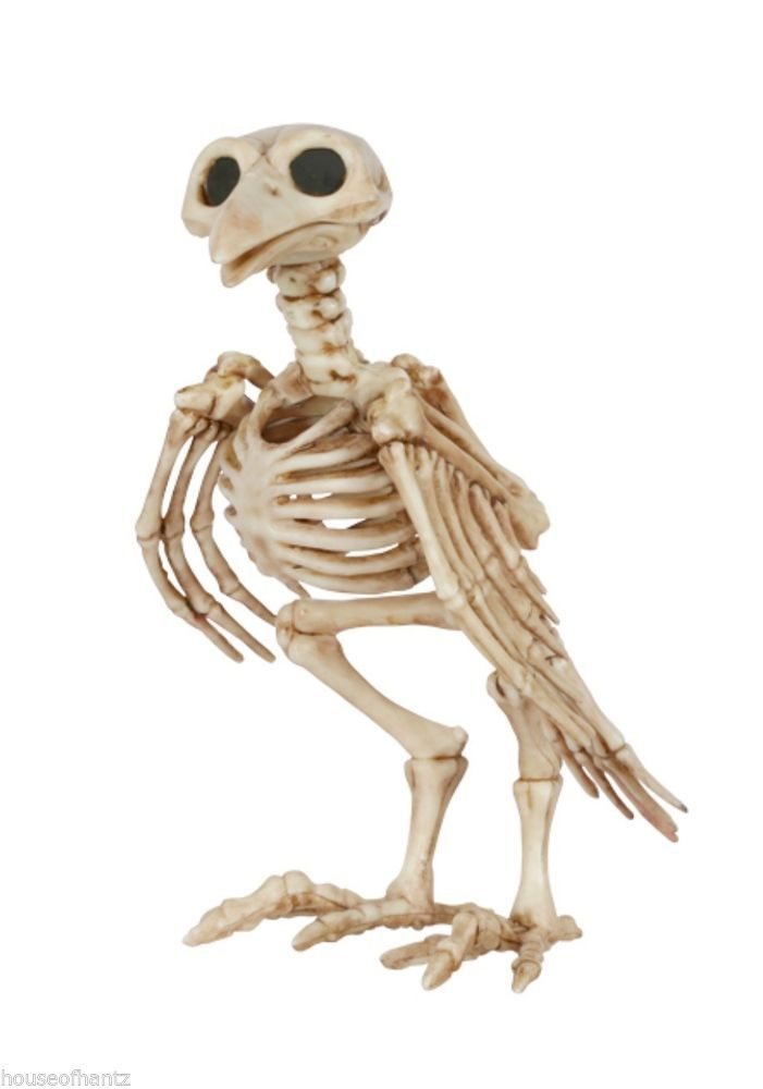 Skeleton Crow Halloween Prop Decor Walking Dead Graveyard Pet Skull ...