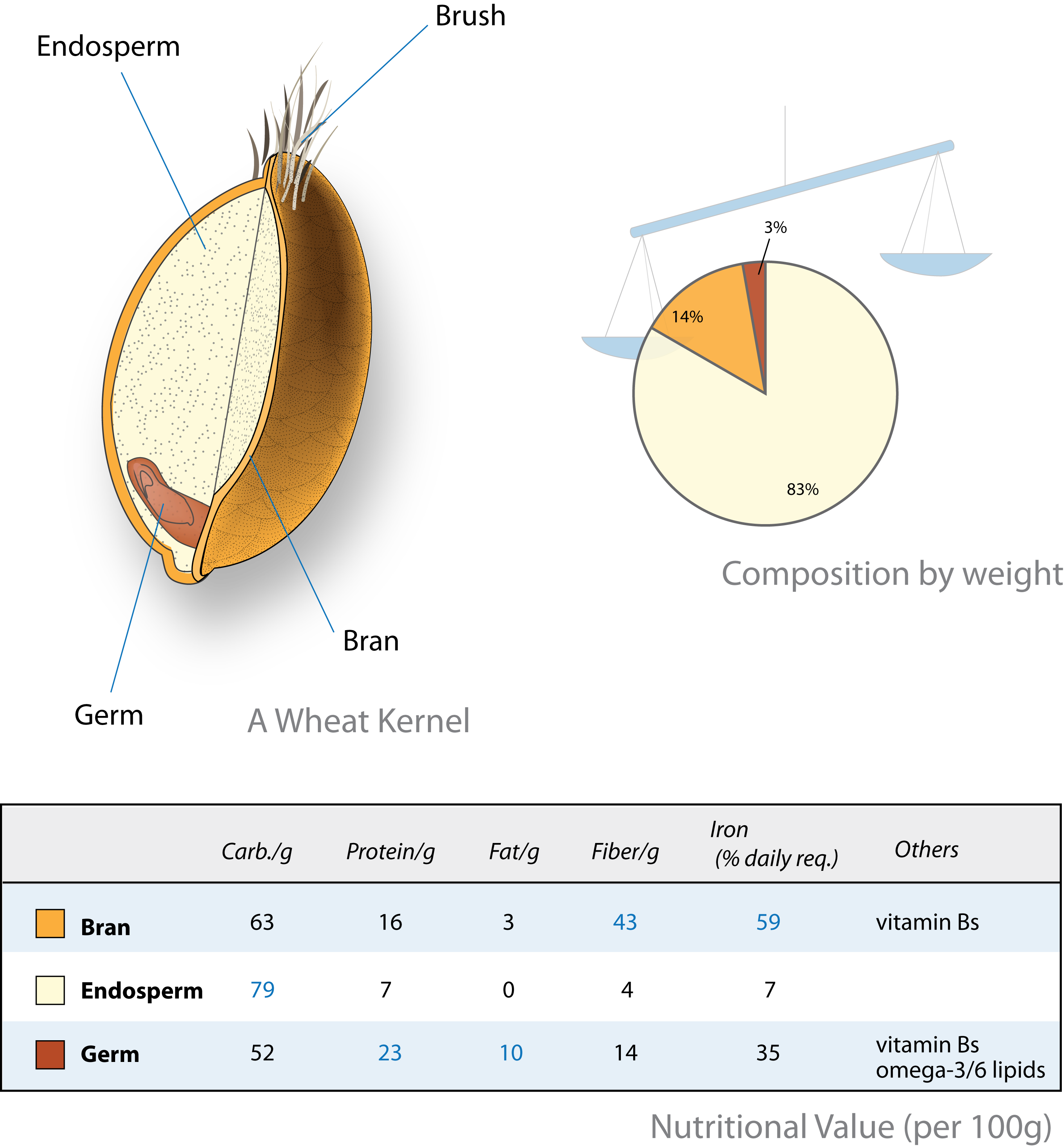 hight resolution of whole wheat grain diagram get more nutrition tips at nutrition101 whole grain diagram