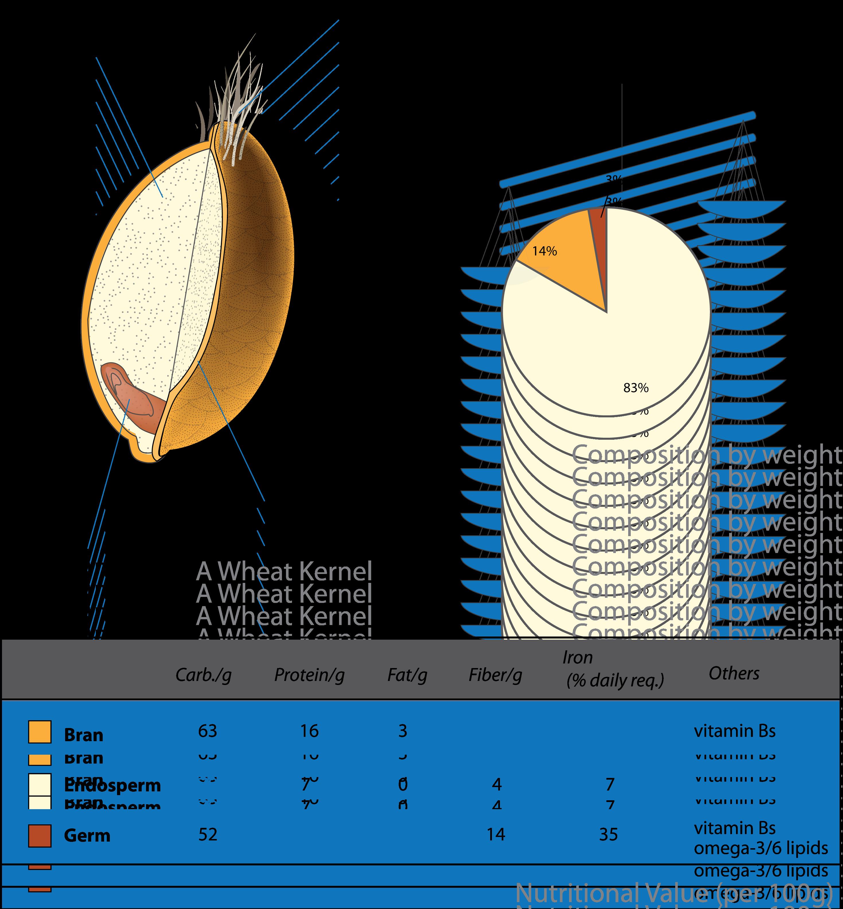 whole wheat grain diagram get more nutrition tips at nutrition101 whole grain diagram [ 2939 x 3169 Pixel ]