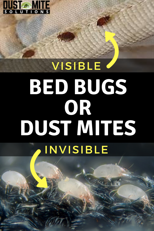 Dust Mites vs Bed Bugs Dust mites, Dust mites bites, Bed