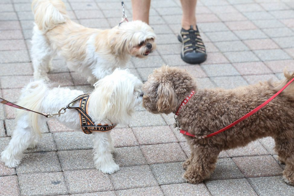 Why Franklin, Tennessee is the Most PetFriendly City in