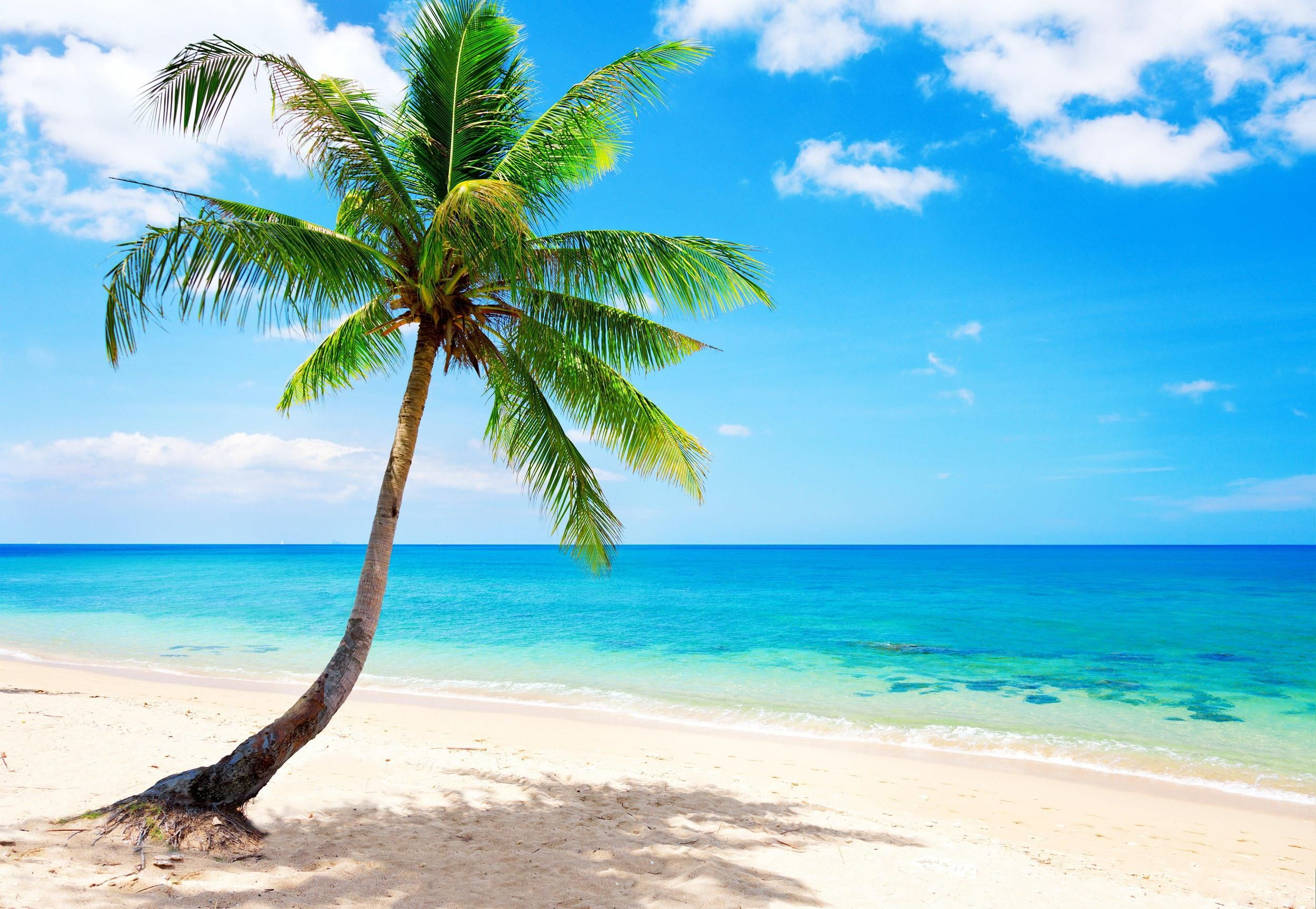 Tropical Beaches With Palm Trees S Wallpapers Photo Jllsly Beach Wallpaper Beach Wall Decals Palm Trees Beach