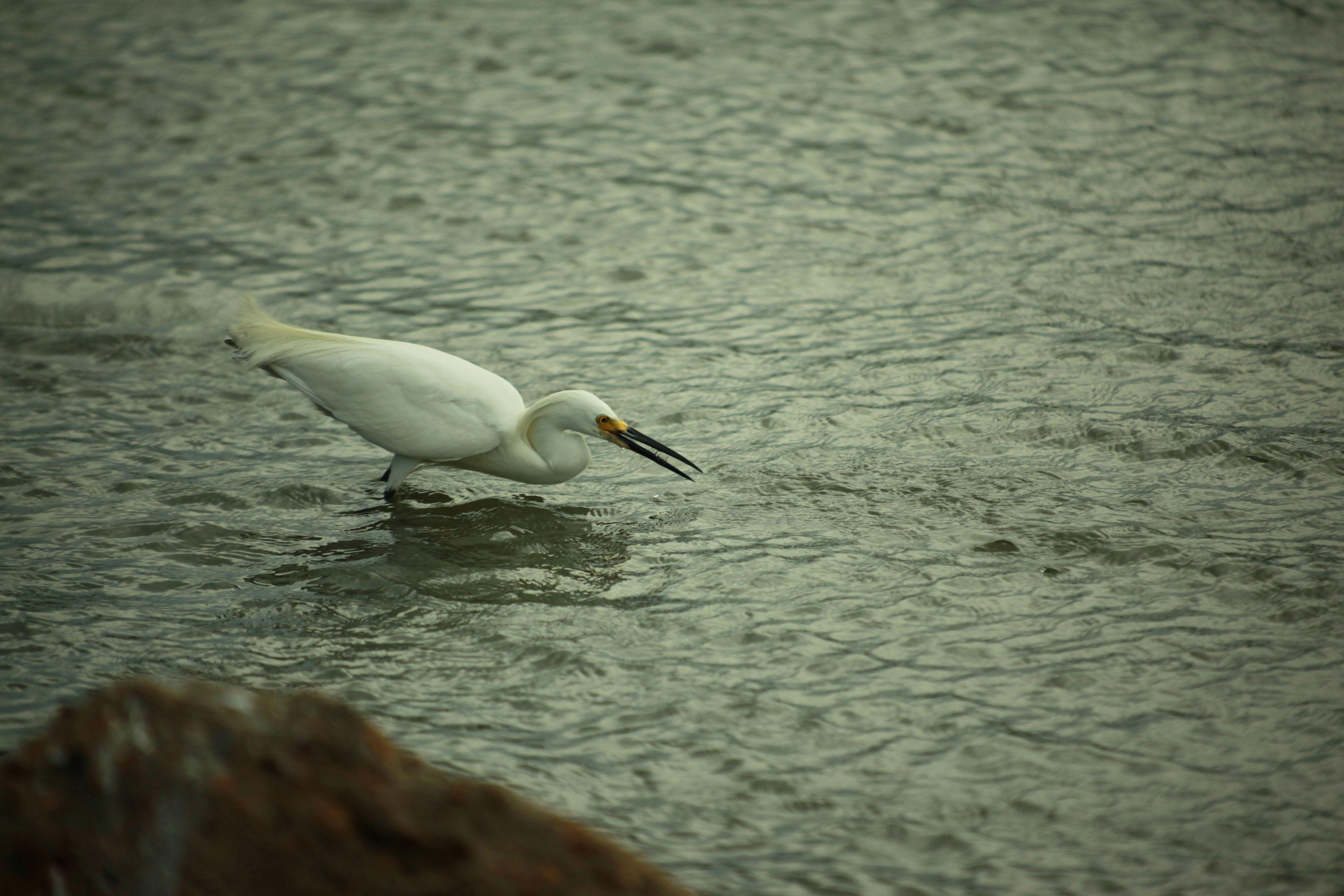 sea bird waits for fish