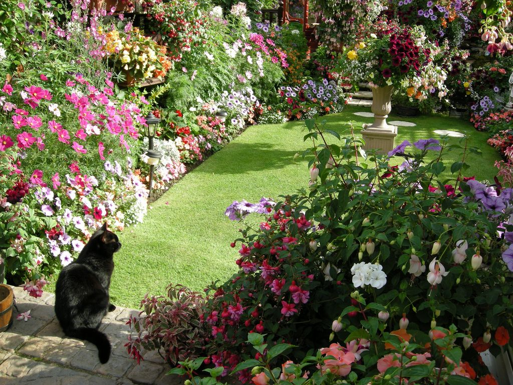 Penny In August Dog Friendly Backyard Country Cottage Garden Colorful Garden