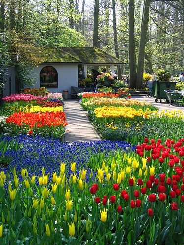 Gardening is a hobby that is enjoyed by people of all ages. It can range from keeping a small patch of flowers on your front lawn to cultivating acres of... FULL ARTICLE @ http://www.gardening-with-me.com/solid-advice-to-make-your-organic-garden-a-success/?ih1ni
