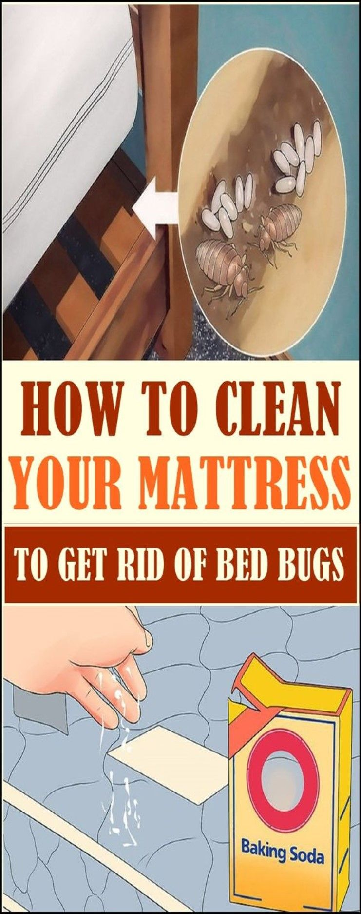 Destroy Bed Mites With This Trick Rid Of Bed Bugs Bed Bugs Bed Bugs Infestation
