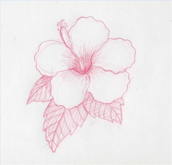 Shoe Flower Line Drawing : How to draw hawaiian flowers step by