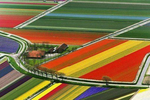 Кёкенхоф — известный на весь мир королевский парк цветов в Нидерландах, расположился на 32 гектарах земли в небольшом городке Лиссе в окрестностях Амстердама . По нынешним меркам парк просто огромен! Также известен под названием Сад Европы. Сад знаменит благодаря большому количеству выращиваемых тюльпанов, всего посажено более 4 миллионов 100 различных видов и оттенков этих цветов. В оранжереях также выращиваются нарциссы, сирень, розы и орхидеи.