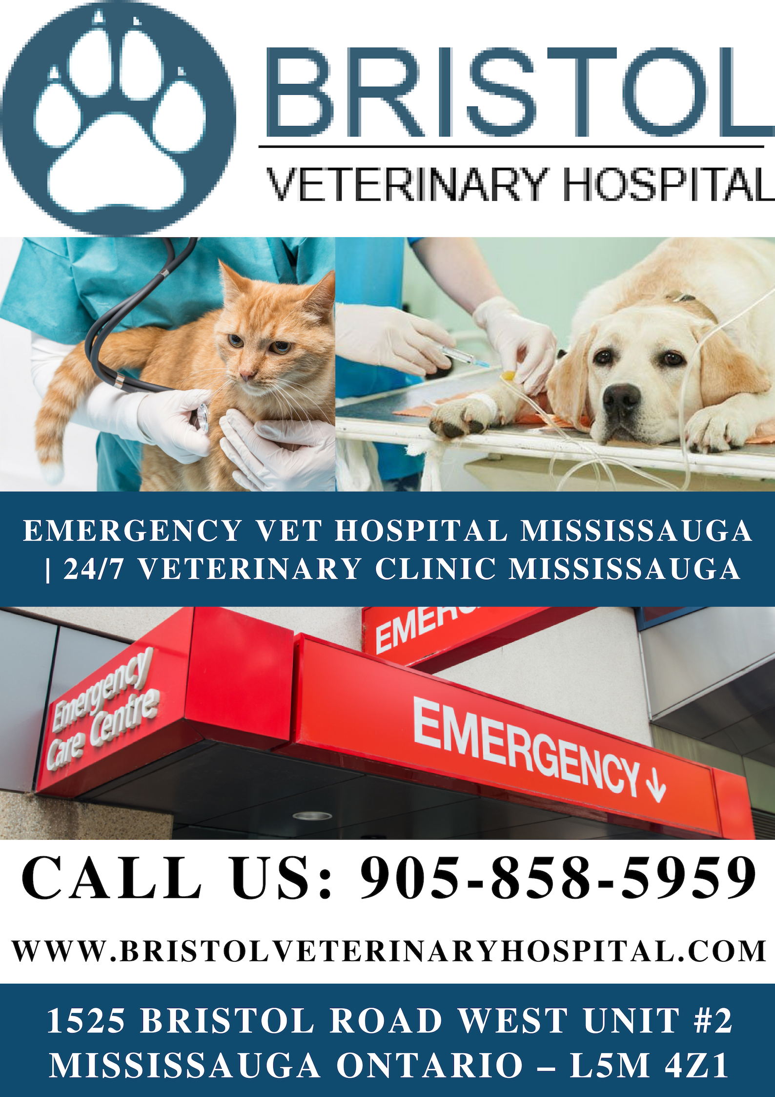 Your pet needs immediate emergency attention, no need to