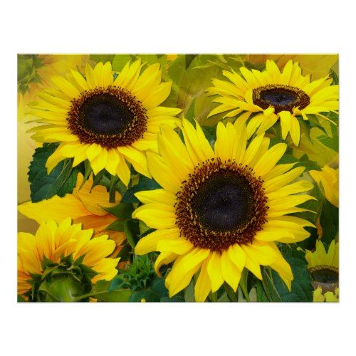 Sunny Sunflower Print Zazzle Com Sunflower Print Sunflower Flower Nature Posters