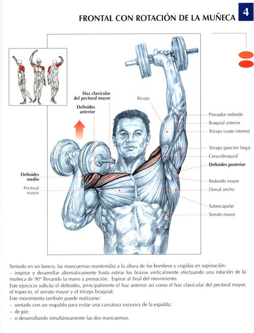 ejercicios para biceps triceps y deltoides