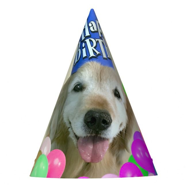 Golden Retriever Dog With Balloons Birthday Party Hat Zazzle Com