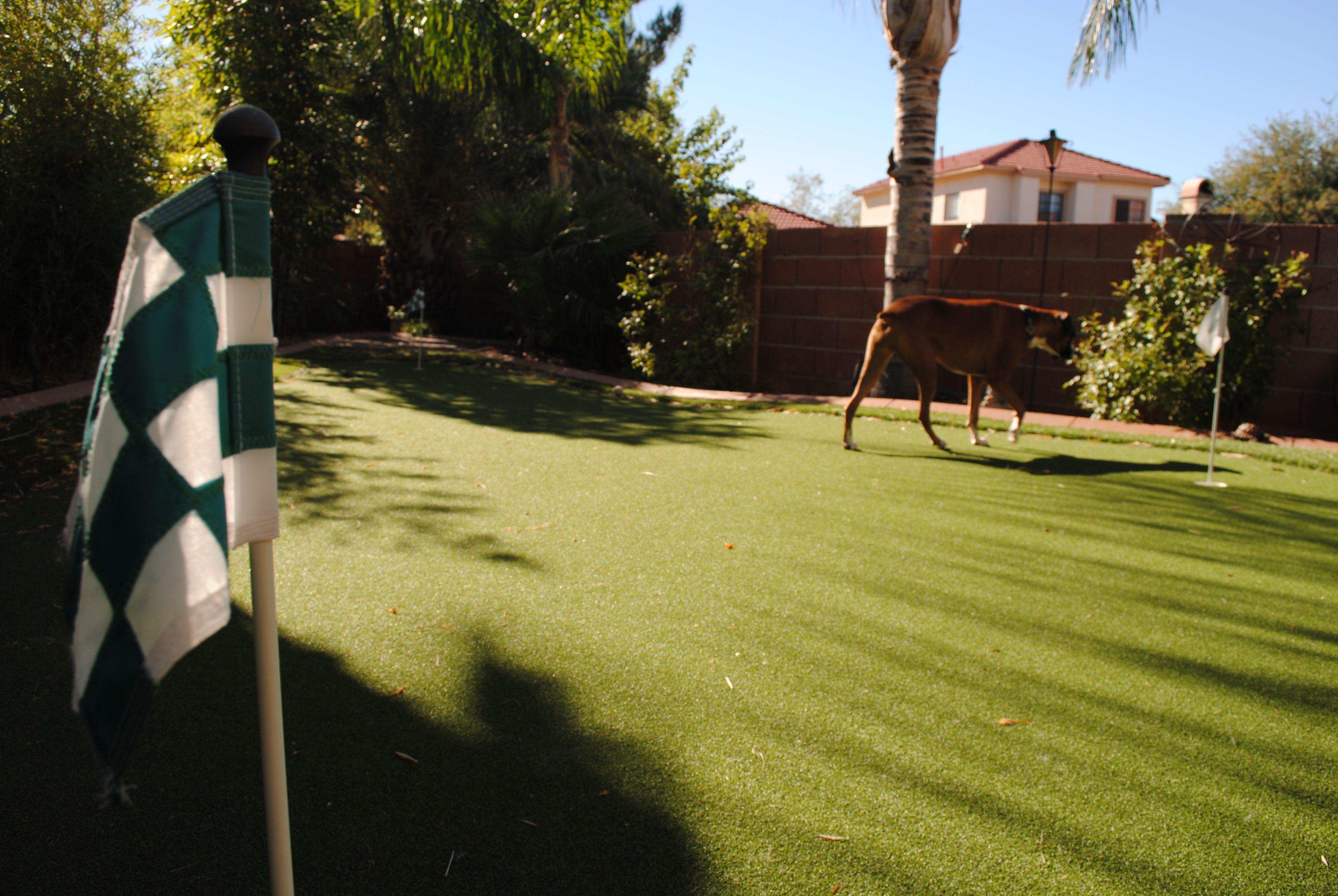 backyard putting green artificial turf southern arizona and