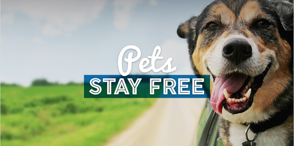PetFriendly Hotels with No Fees Pet friendly hotels