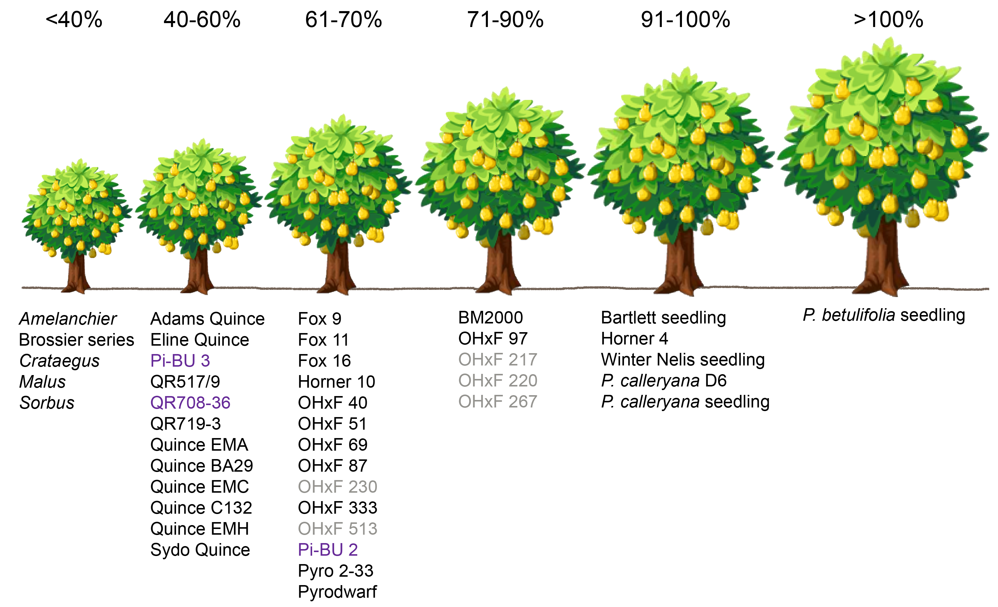 Images Frech Training Of Fruit Trees Google Search