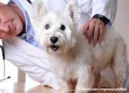 Evaluación de Salud Para Mascotas