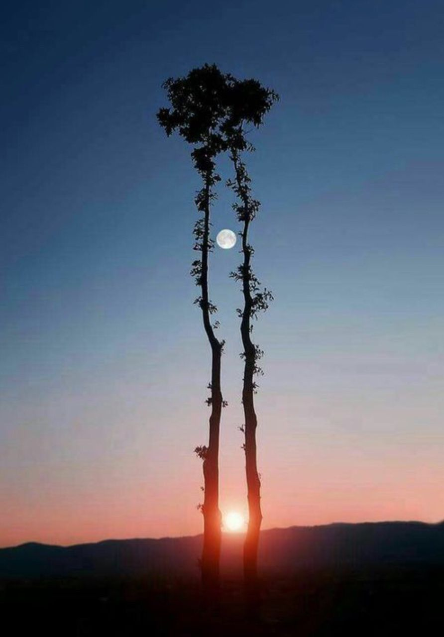 Two trees reach toward the moon