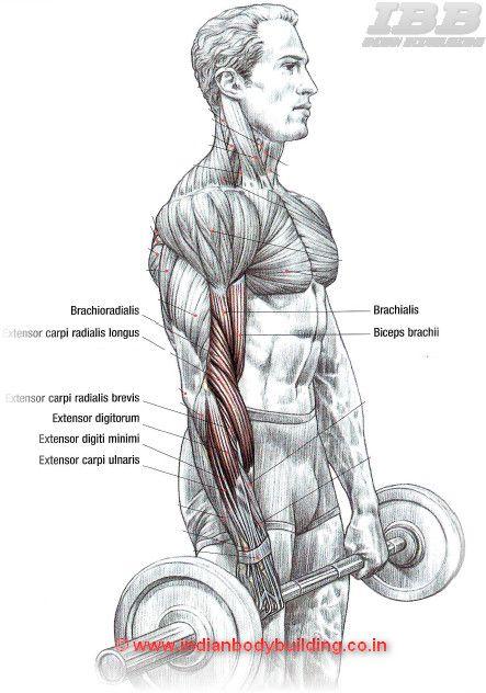 Biceps Reverse Curls | Workouts | Pinterest | Biceps ...