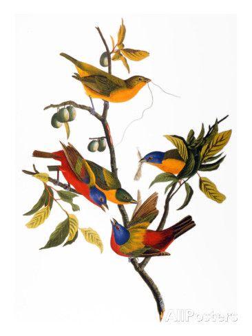 Pin On Audubon Portrait