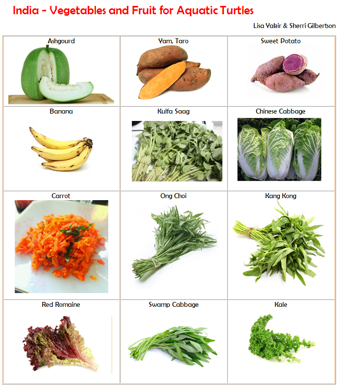 Some Veggies And Fruits Available In India That Are Turtle Safe Aquatic Turtles Turtle Care Slider Turtle