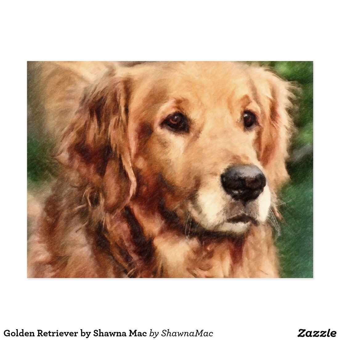 Golden Retriever by Shawna Mac Postcard Golden retriever