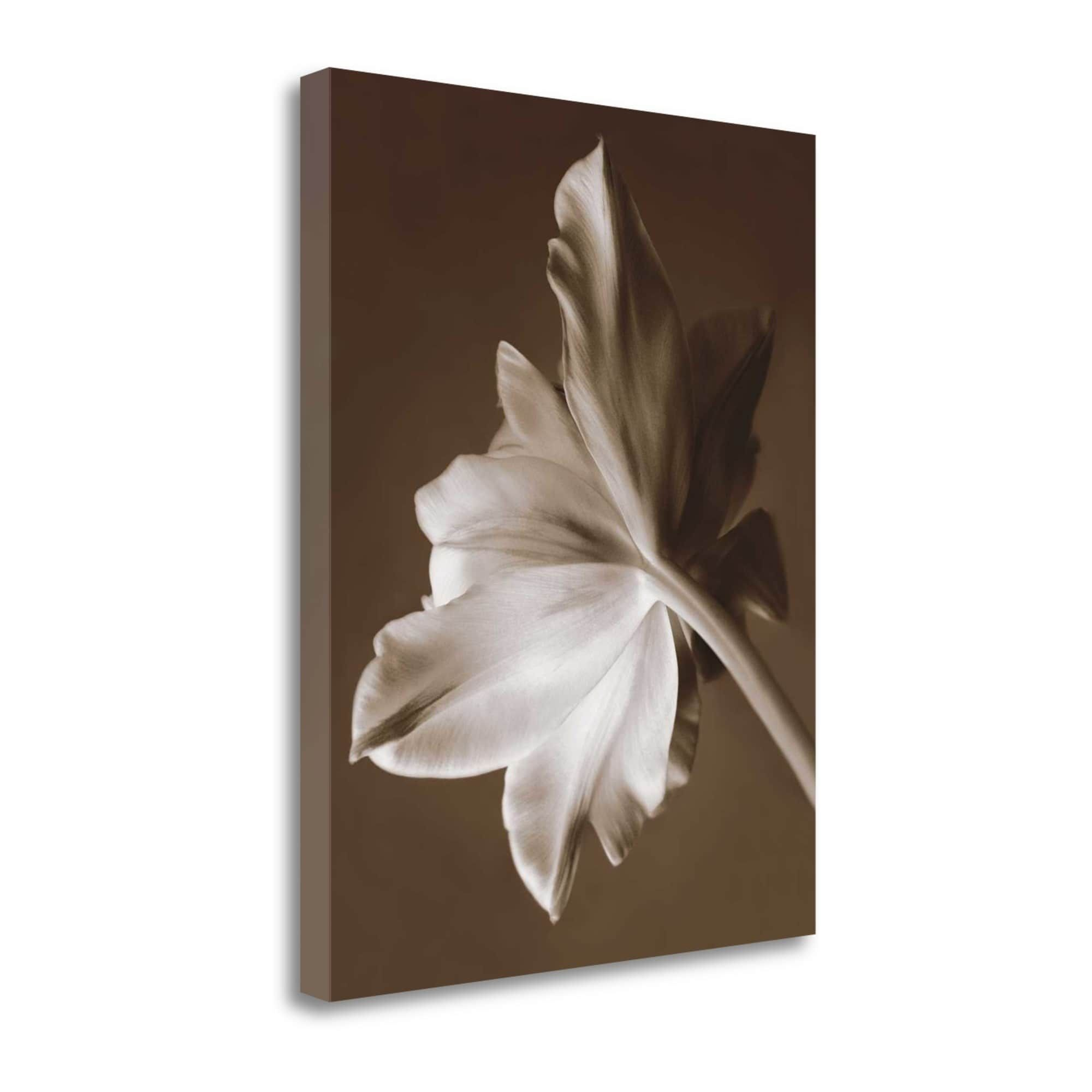 Tangletown Fine Art Moonglow Tulip By Rebecca Swanson, Gallery Wrap Canvas, Green