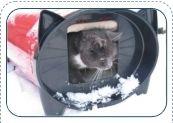 KatKabin, outdoor cat house, cat house shelter, outdoor cat shelter, dog house - Cat House Shelter | Ecoglow Pet Warming Pad | Outdoor Cat Condo