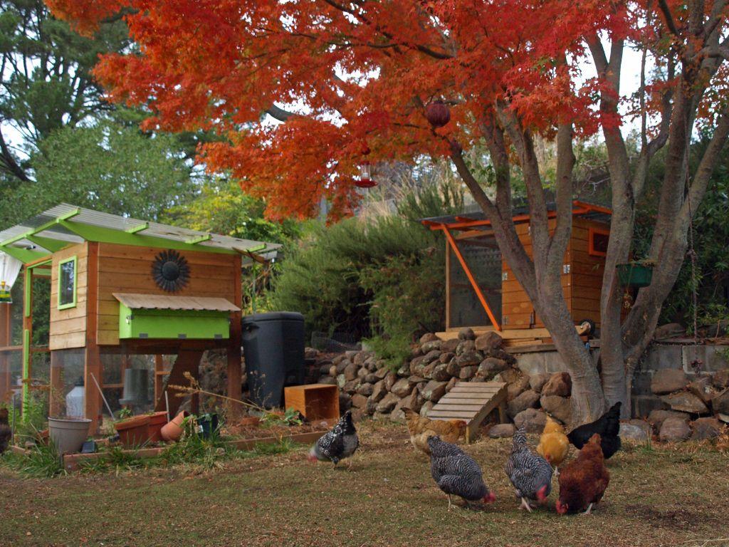 abby & john's california chicken coop - garden coop plans ::: coop