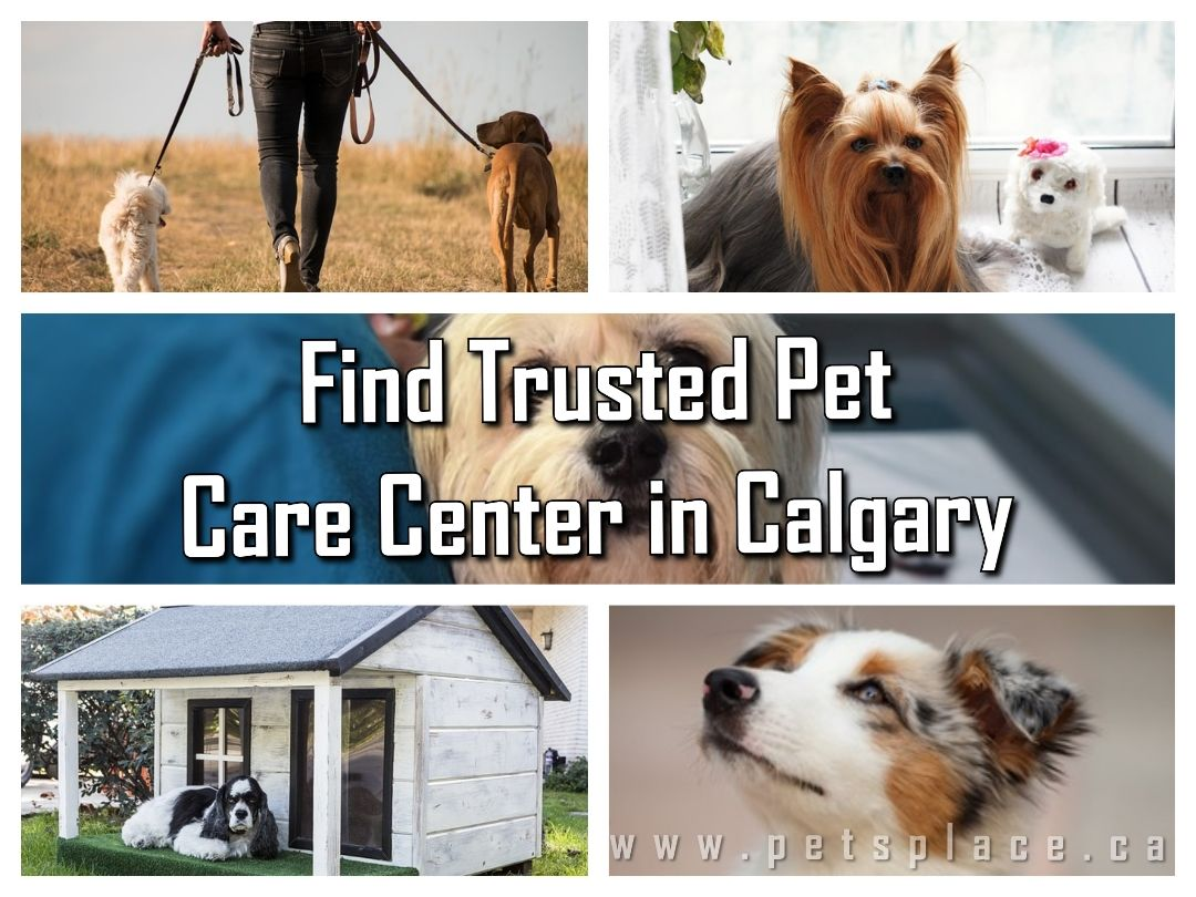 If You Are Looking For Reliable Pet Care Center In Calgary You Have Come At Right Place At Petsplace You Ll Find A Wide Range Of With Images Pet Care Pets Service