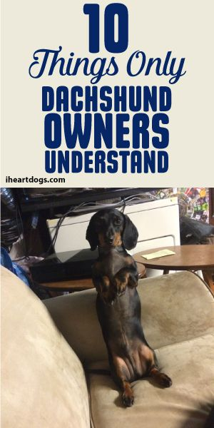 10 Things Only Dachshund Owners Understand | Dachshund ...