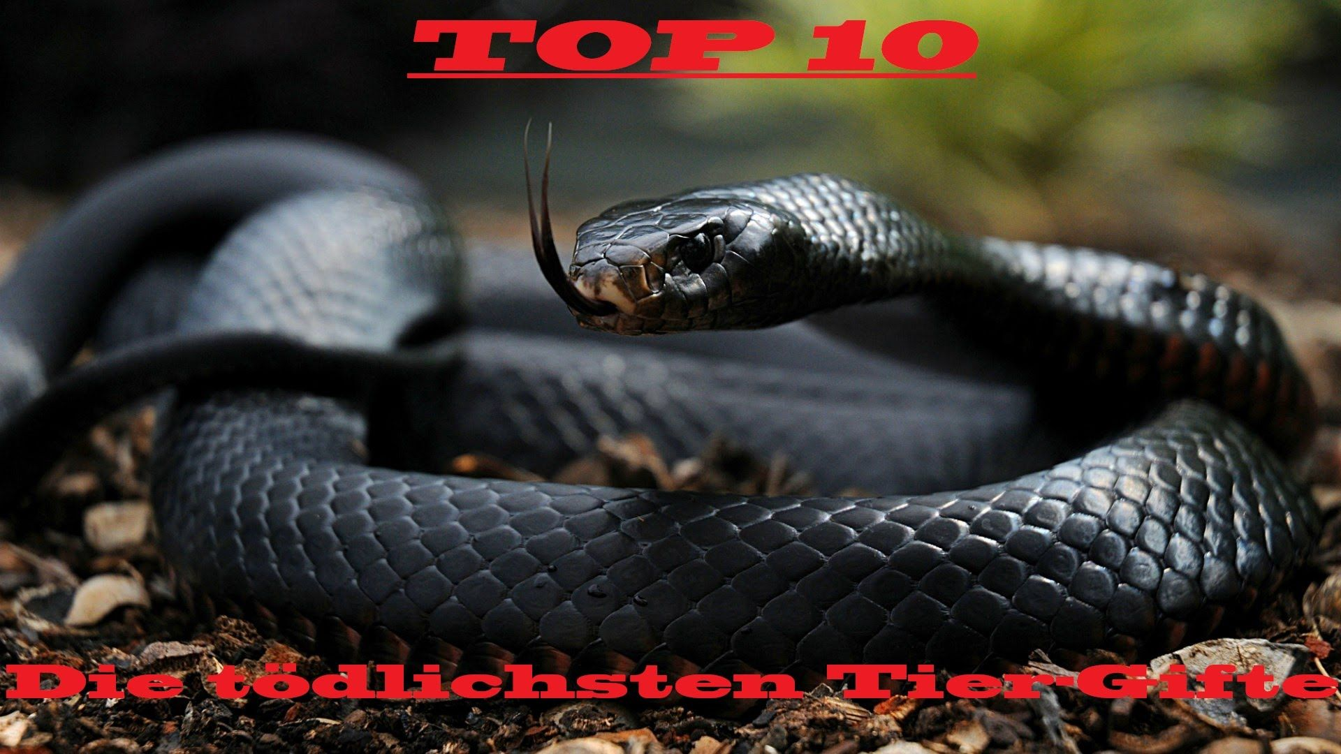 Die giftigsten Tiere der Welt